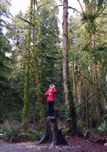 standing on a tree stump in snoqualmie falls near seattle
