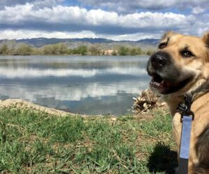 hiking with dogs around the lake