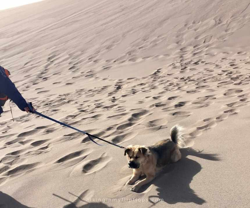 hiking with the dog on sand dunes