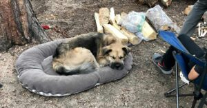 a dog laying on a dog bed at a campground helps for keeping dogs warm while camping